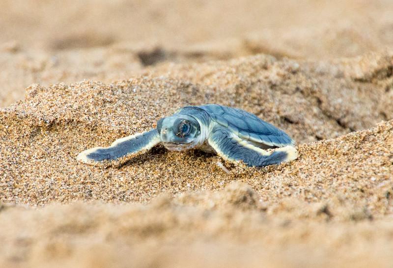 baby turtle 1.jpg