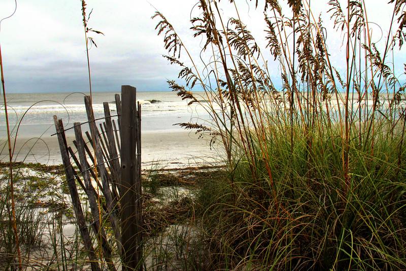Beach Grass Hilton Head.jpg