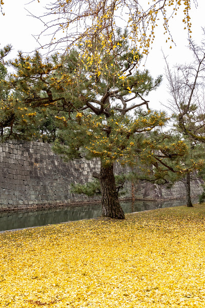 Kyoto12062018_314.jpg