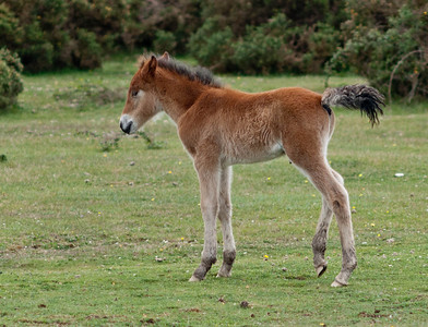 New Forest Foals - May 2011