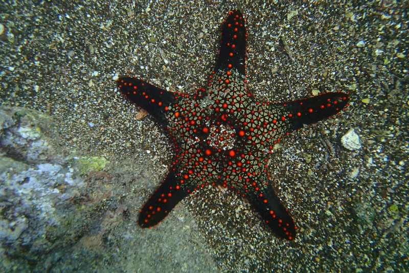 Scott's Starfish.jpg
