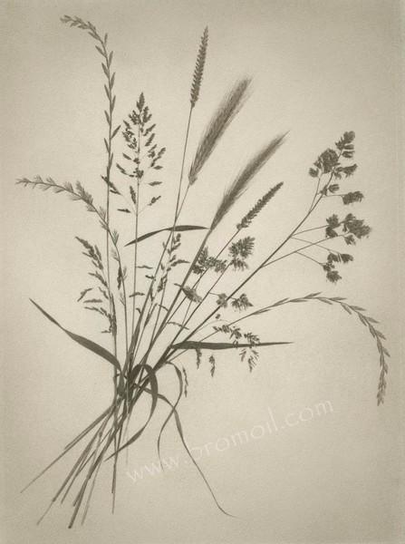 Grasses Bromoil Print.jpg
