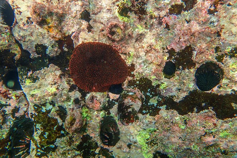 Galapagos-Best-205.jpg