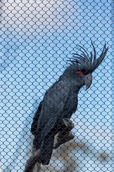 SD Zoo 3.20-111.jpg