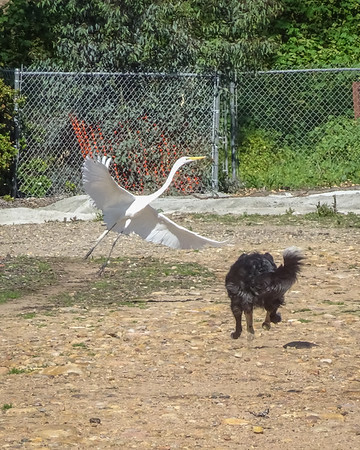 February 23: Caitlin and the Great Egret