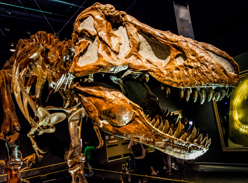 T. Rex in Royal Tyrrell Museum of Palaeontology in Drumheller, Canada