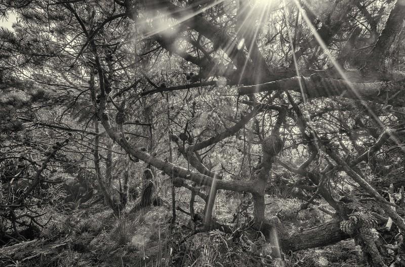 Forest at Stump Beach #2