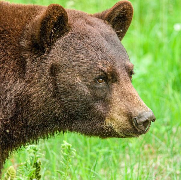 Bears-46.jpg