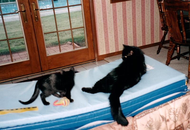 2000_April_Cats_0004_a.jpg