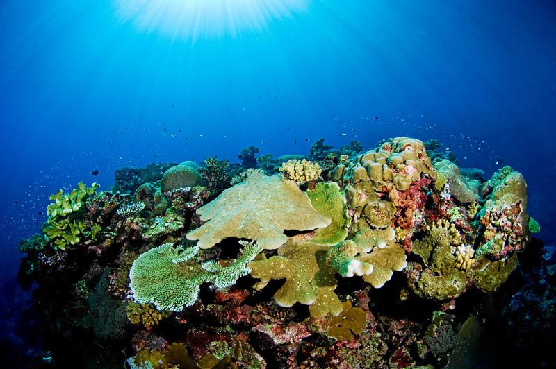 The sun is lighting this reef scene.