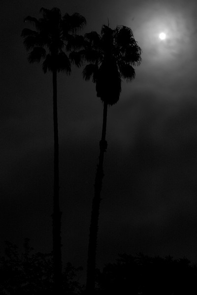 Moon Night_02-1.jpg