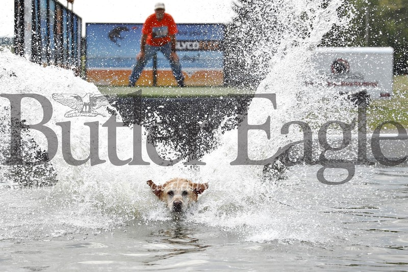 Kevin McAfee of Butler watches Bella, a yellow lab from DockDogs, jump into the dog jumping pool set up at Morraine State Park for this weekend's regatta. Dog jumping competitions will be going on throughout the two-day regatta. Seb Foltz/Butler Eagle 08/04/19