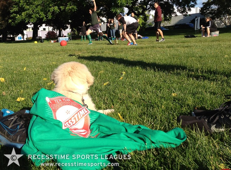 Puppy watching kickball