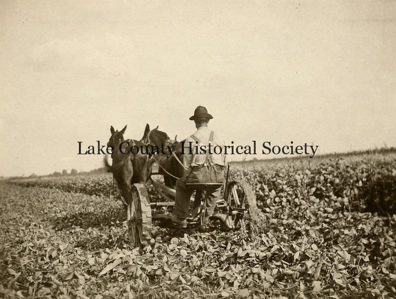 Agriculture-1.jpg