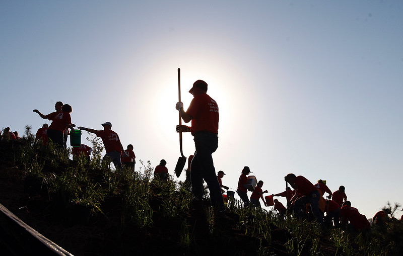 Lilly workers plant trees and bushes on the sloped interchange area. An Eli Lilly beautification project along I-70 in downtown Indianapolis closed the highway as thousands of Lilly employees worked to plant trees, bushes and flowers along the interstate. Here Lilly employees work at the I-70 / Sam Jones Expressway interchange on Thursday morning, Oct 7, 2010. Sam Riche / The Star