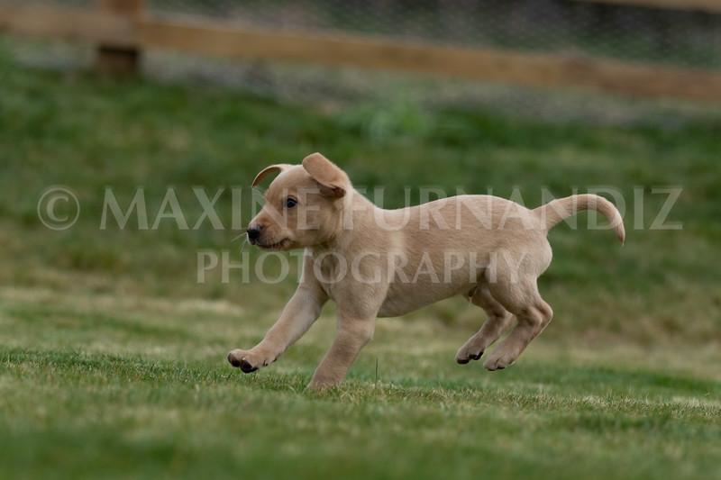 Weika Puppies 24 March 2019-6630.jpg