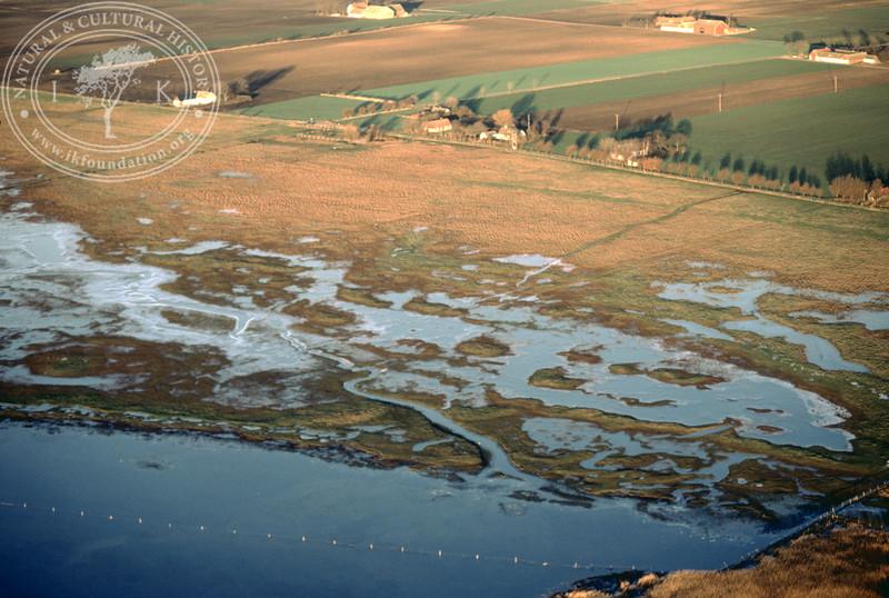 Salt marsh landscape in the southern part of the Öresund, between Hammarsnäs to Tygelsjö meadows in Southwest Skåne (12 December, 1987).   LH.0158