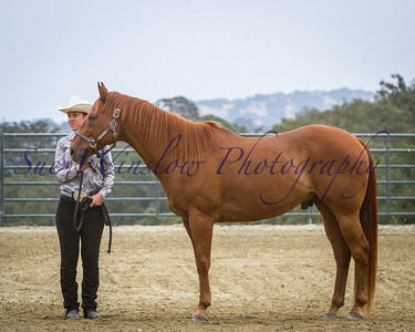 Ranch Horse on Halter