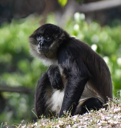 Naples Zoo Jan 25, 2021