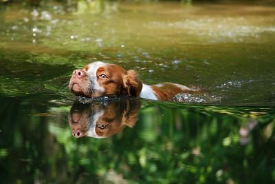 Wasserarbeit mit Jagdhund