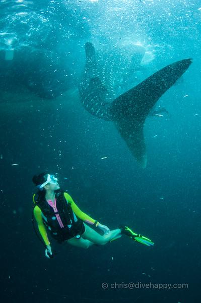 triton-bay-whale-sharks-divehappy-chris-mitchell-2.jpg