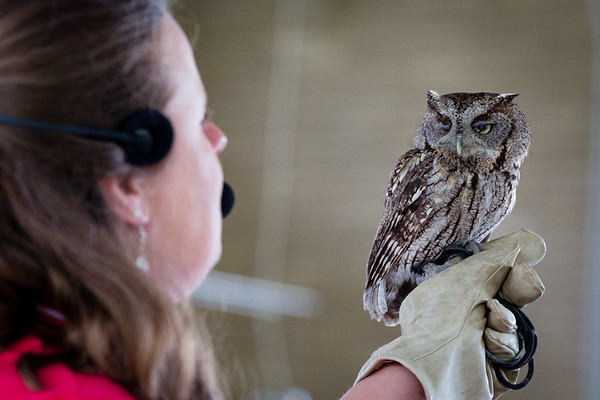 St. Louis Earth Day Festival 2014 pictures - World Bird Sanctuary Owl
