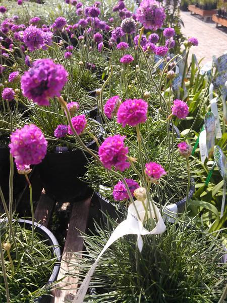 2014.05.11 - Mother's Day - Lurvey Garden Center