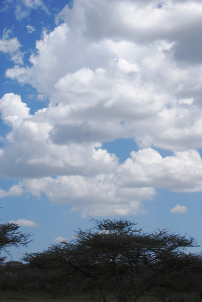 Serengeti (200).JPG