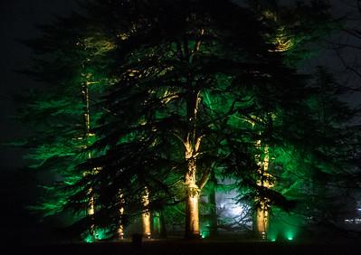Westonbirt Enchanted Christmas 2016