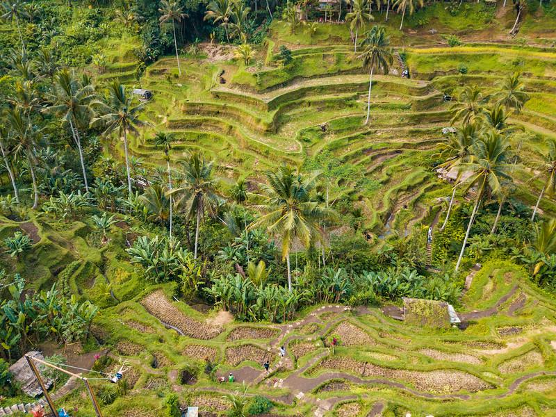Bali (168).jpg
