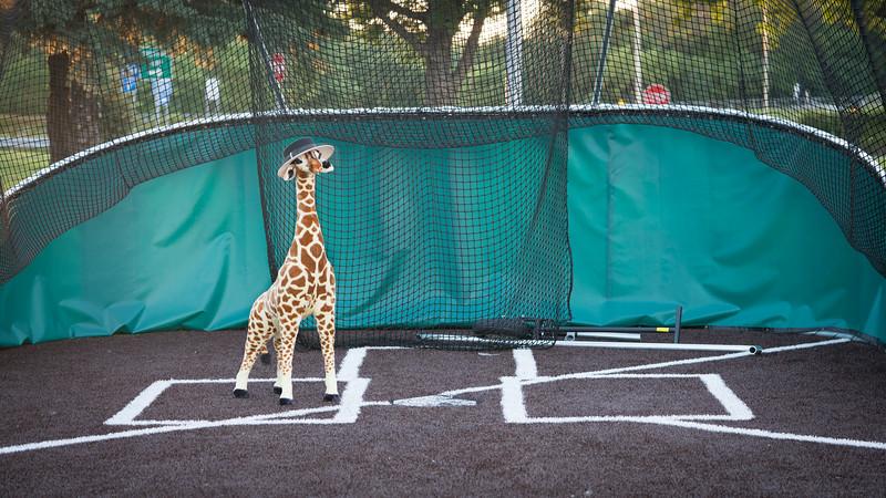 Giraffe-3117.jpg