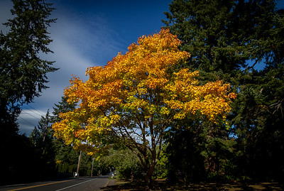 Walkabout: Fall Color 2017