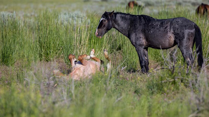 Wild Mustangs 2019-38.jpg