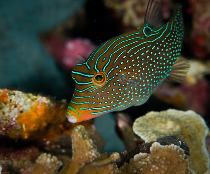 fish_DSC2682.jpg