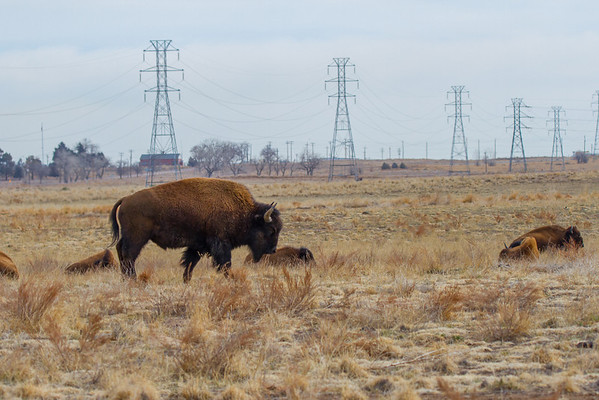 Rocky Mountain Arsenal 03-06-2014