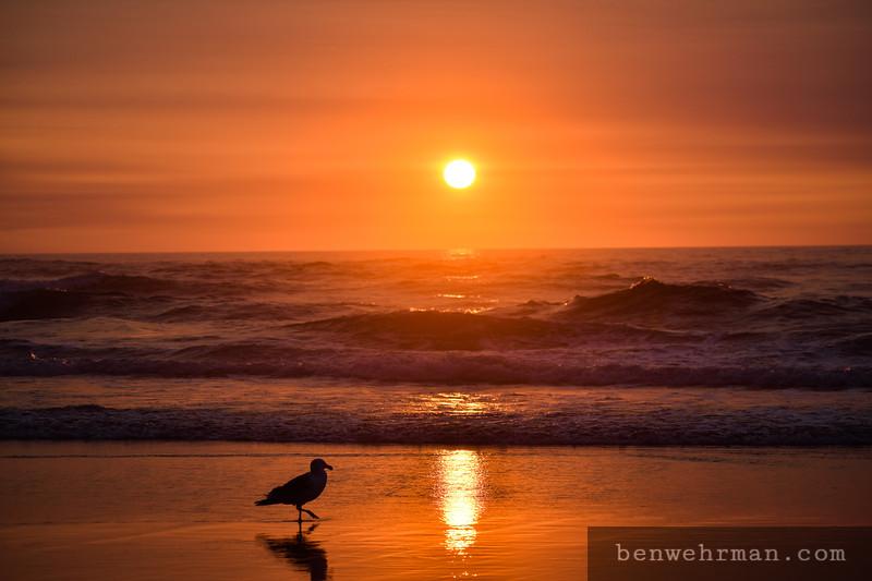 Seagull Sunset Silhouette