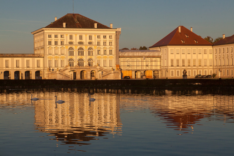 Swan at Schloss Nymphenburg