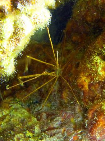 2013-11-11 Night Dive