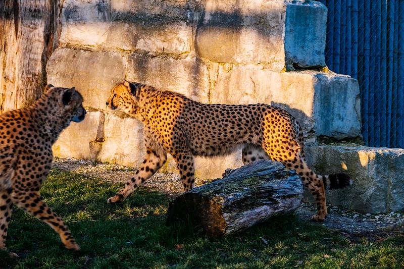 Tonis Zoo-0301.jpg