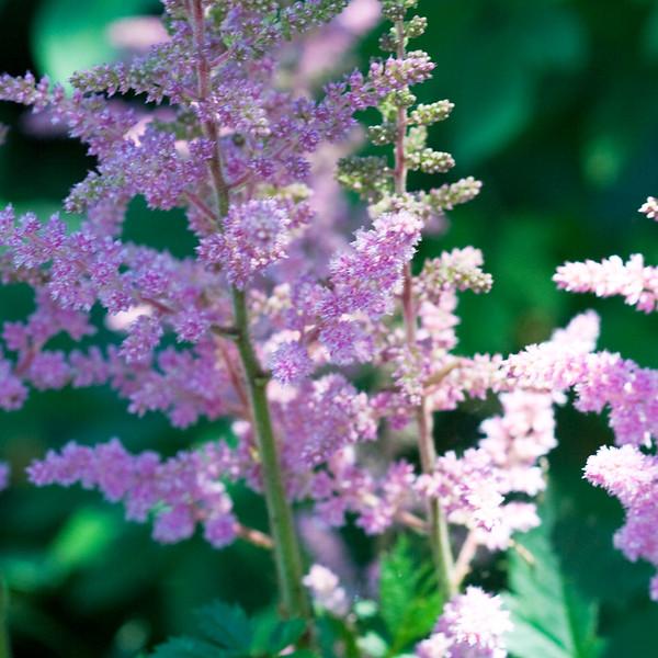 2009 06 30_NY Botanical Gardens_0751_edited-1.jpg
