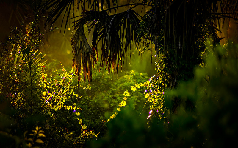The Magic of Light-458.jpg