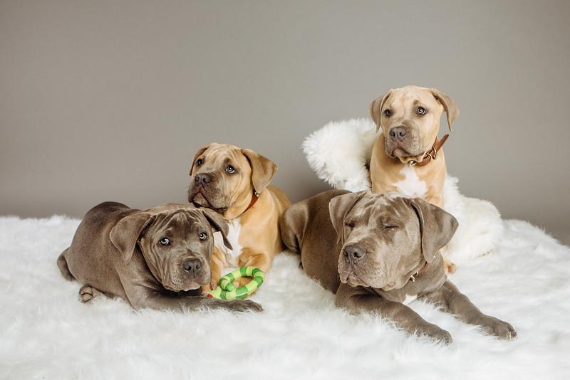badap-puppies-44.jpg