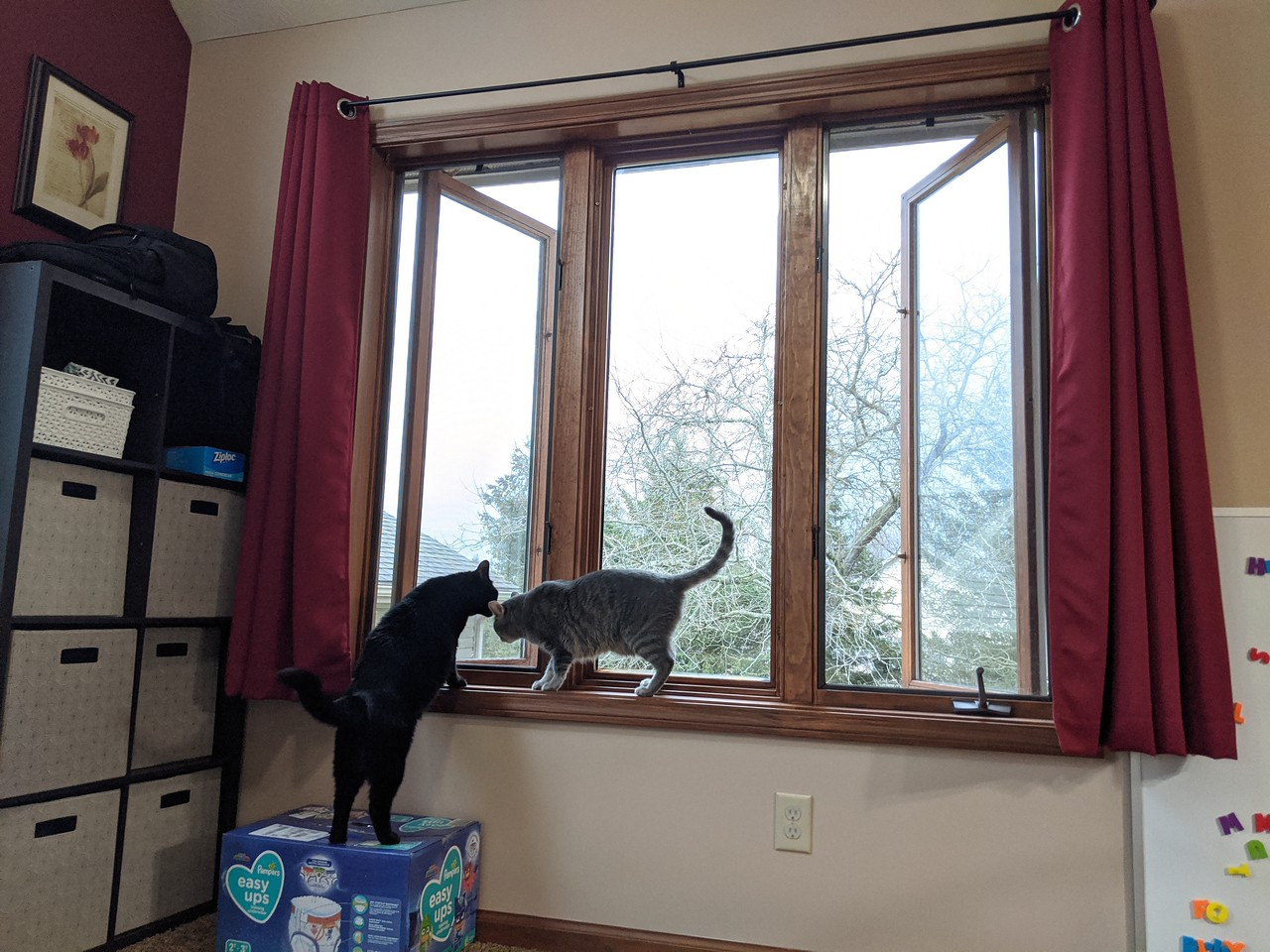 Cats enjoying the open windows (with screens) at 1:45 on March 28, 2020