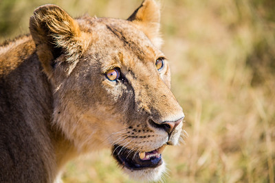Serengeti National Park 3 (TZ)