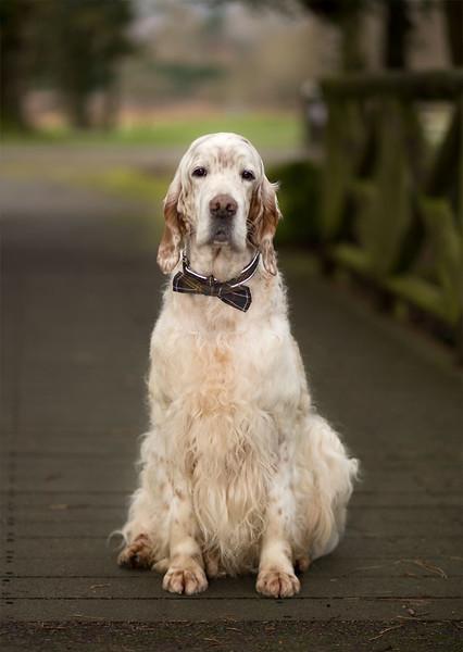 dog-photo-shoot-whitworth-park.jpeg