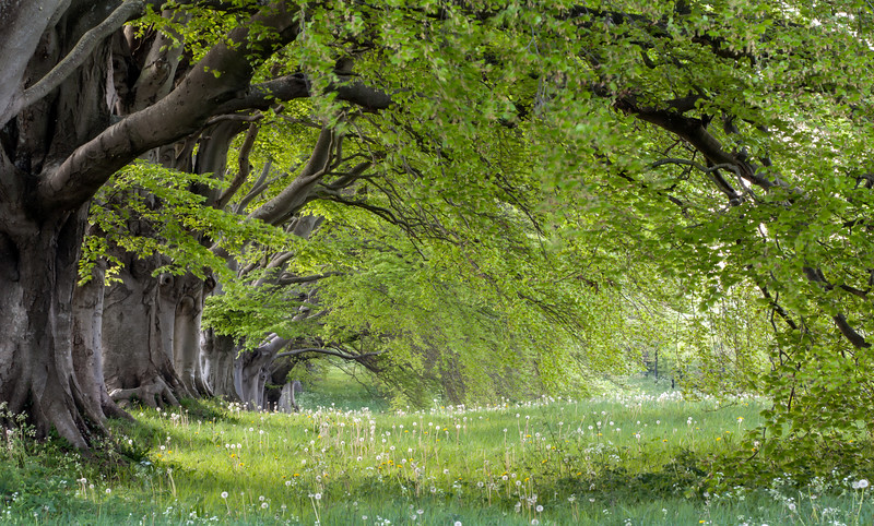 Kingston Lacy Trees.jpg