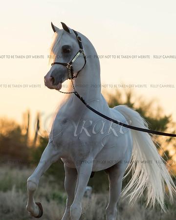 Heathcott Arabians