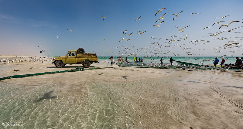 Sardine Season (23)- Dhofar.jpg