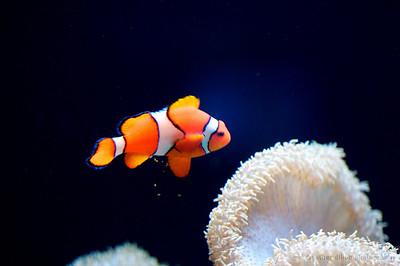 2008-01 Aquarium