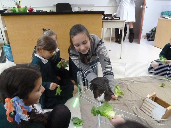 Gr.2's at Sr. Science Wing - Guinea Pig